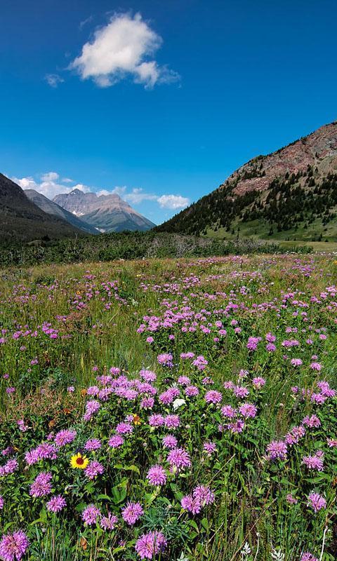 HD Mountain Flower Wallpaper poster ...