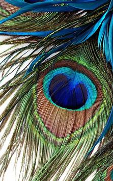 HD Peacock Feather Wallpaper Apk