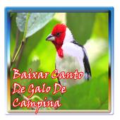 Baixar Canto De Galo De Campina icon