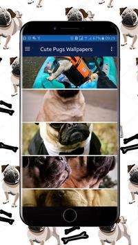Cute Pugs Wallpapers screenshot 3