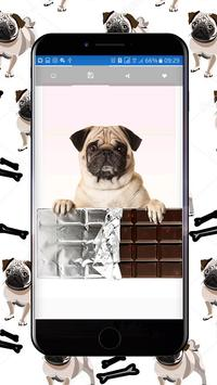 Cute Pugs Wallpapers screenshot 2