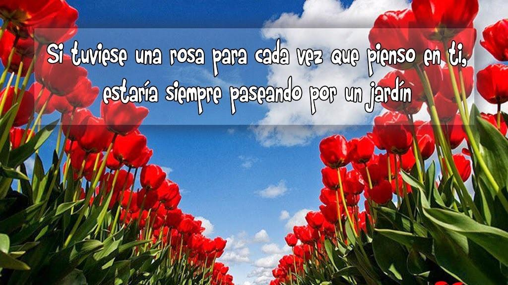 Frases Celebres Con Paisajes For Android Apk Download