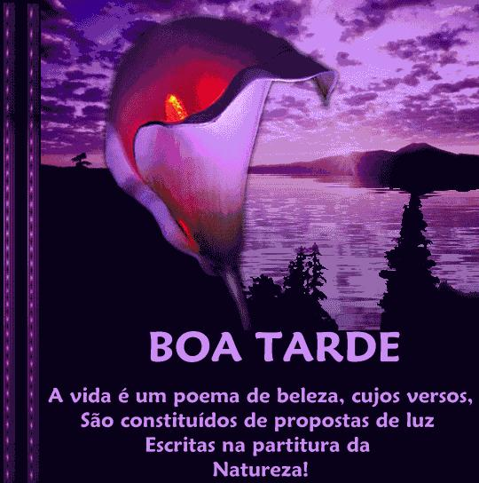 Frases Com Imagens Boa Tarde For Android Apk Download