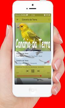 Canto De Canario Da Terra screenshot 2