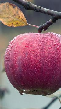 free apple wallpaper poster