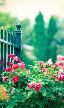 free rose garden wallpaper poster