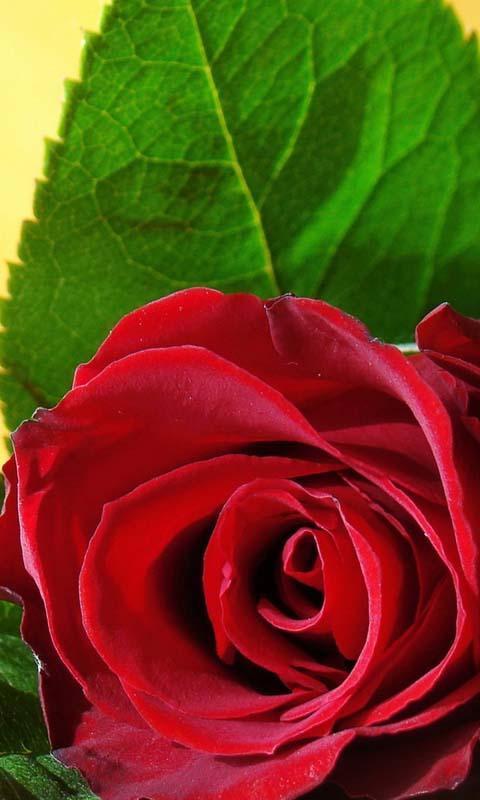 ... 3D Love Rose Live Wallpaper screenshot 2
