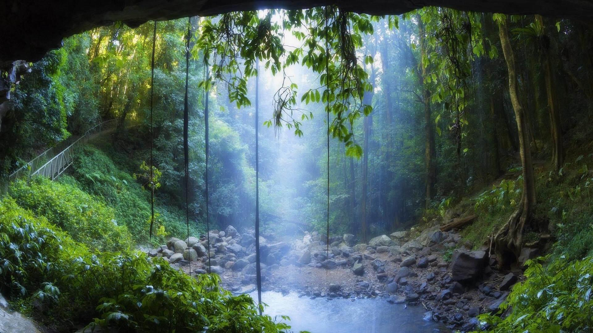 Rain Forest Wallpaper Hd For Android Apk Download