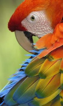 Talking Parrot Free LWP apk screenshot