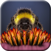 Bee Wallpapers Free icon