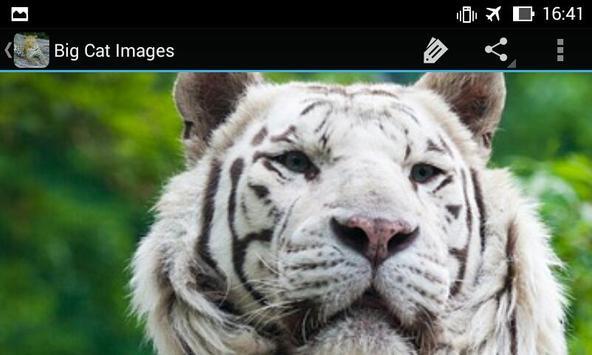 BigCatBG: Big Cat Wallpapers apk screenshot
