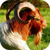 Apps for Goat Lovers icon