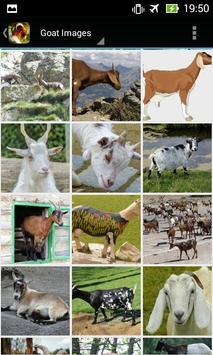 Apps for Goat Lovers apk screenshot