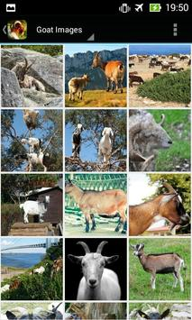 Apps for Goat Lovers poster