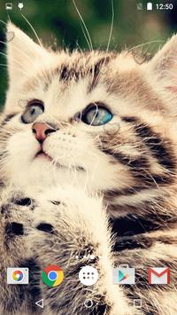 Cute Kittens Live Wallpaper screenshot 4