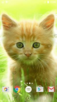 Cute Kittens Live Wallpaper screenshot 1