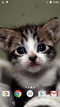 Cute Kittens Live Wallpaper screenshot 23