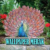 Wallpaper Burung Merak - Terbaru icon