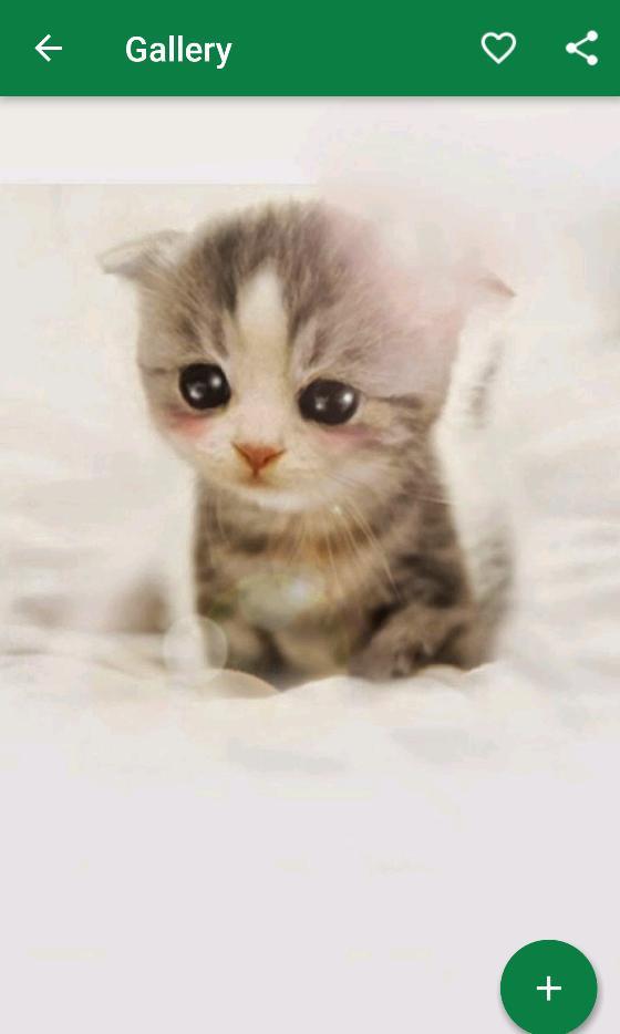 640 Wallpaper Kucing Lucu Untuk Hp Terbaik