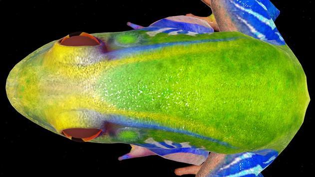 Frog 3D screenshot 3