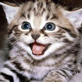 Funny Cats & Kittens Gallery icon