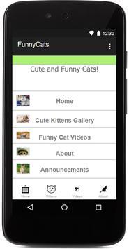 Funny Cats & Kittens Gallery screenshot 2