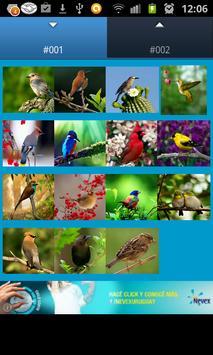 Birds Sounds (3D) poster