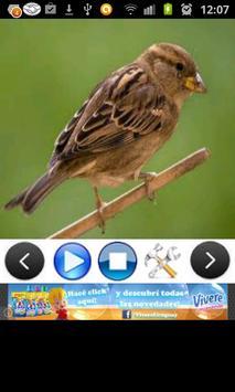 Birds Sounds (3D) screenshot 1
