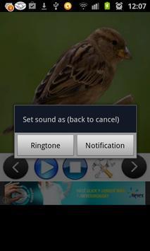 Birds Sounds (3D) screenshot 2
