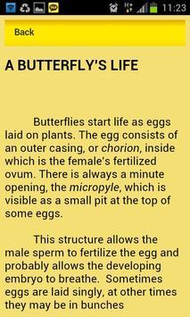 Attract Butterflies poster