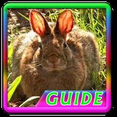 Guide Rabbit Breeding icon