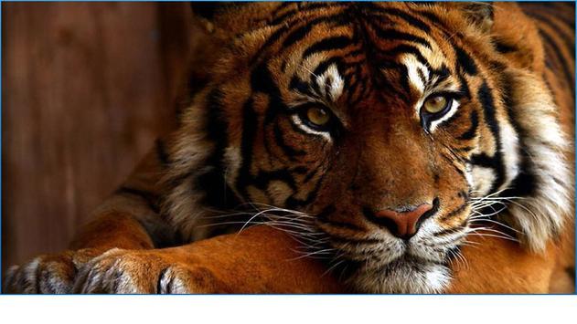 My Animals Photos screenshot 4