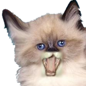 Funny Voice Kittens icon