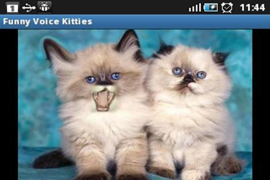 Funny Voice Kittens poster