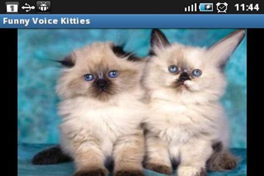 Funny Voice Kittens screenshot 1