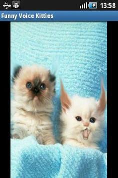 Funny Voice Kittens screenshot 2