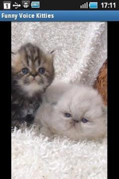 Funny Voice Kittens screenshot 3
