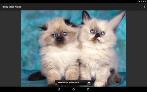 Funny Voice Kittens screenshot 5