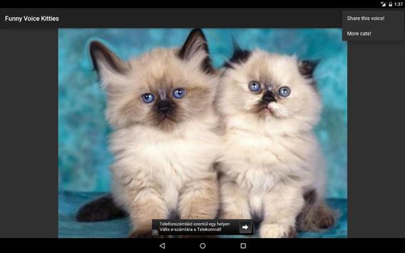 Funny Voice Kittens screenshot 6