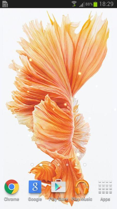 Betta Fish 6s Live Wallpaper For Android Apk Download
