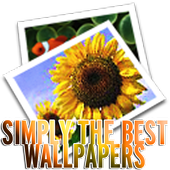 Simply The Best Wallpapers HD icon