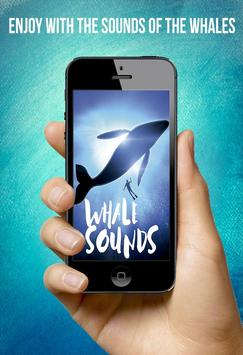 🎧🐳Whale Sounds🐳🎧 poster
