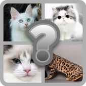 Guess these Cute Cats icon