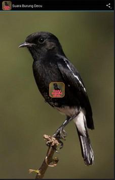 Suara Burung decu poster