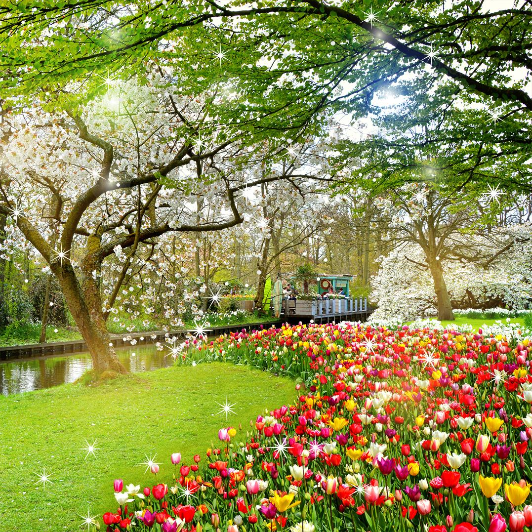 Beautiful Garden Wallpaper For Android