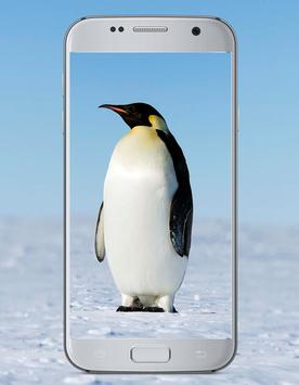 Penguin Cute Wallpaper poster