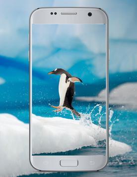 Penguin Cute Wallpaper screenshot 4
