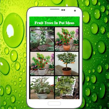 Fruit Trees In Pot Ideas screenshot 1