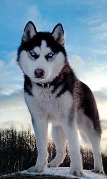 Huskies Jigsaw Dogs New Funs Jigsaw Puzzle apk screenshot