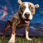 Pit Bulls Dogs New Funs Jigsaw Puzzle icon